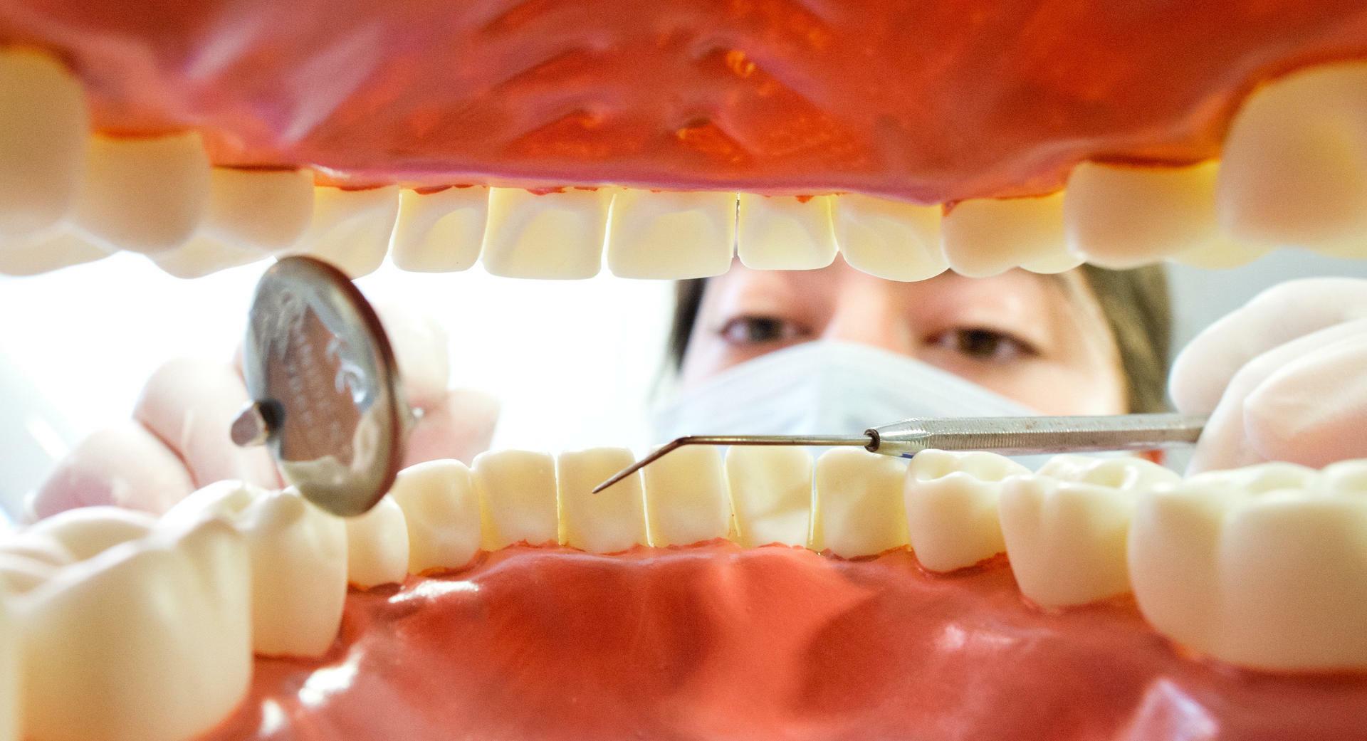 Zähne wachsen lassen stammzellen