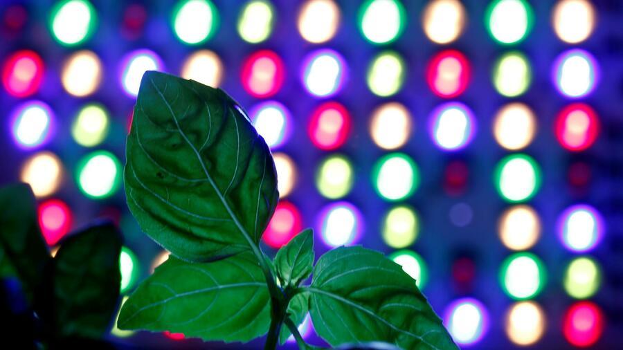 Leuchtmittel-Markführer Signify und Osram: Das Leben nach dem Tod der Glühbirne