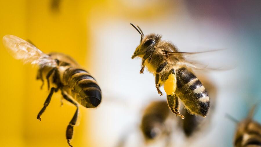 Bayer und Syngenta verlieren Klagen gegen Insektizid-Beschränkungen