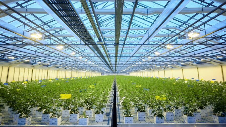 Canopy Growth will nach Kurssturz Geschäft in Europa ausbauen