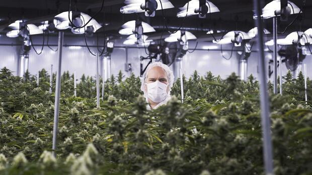 Cannabis-Aktien: Deutsche Börse stellt Handel...