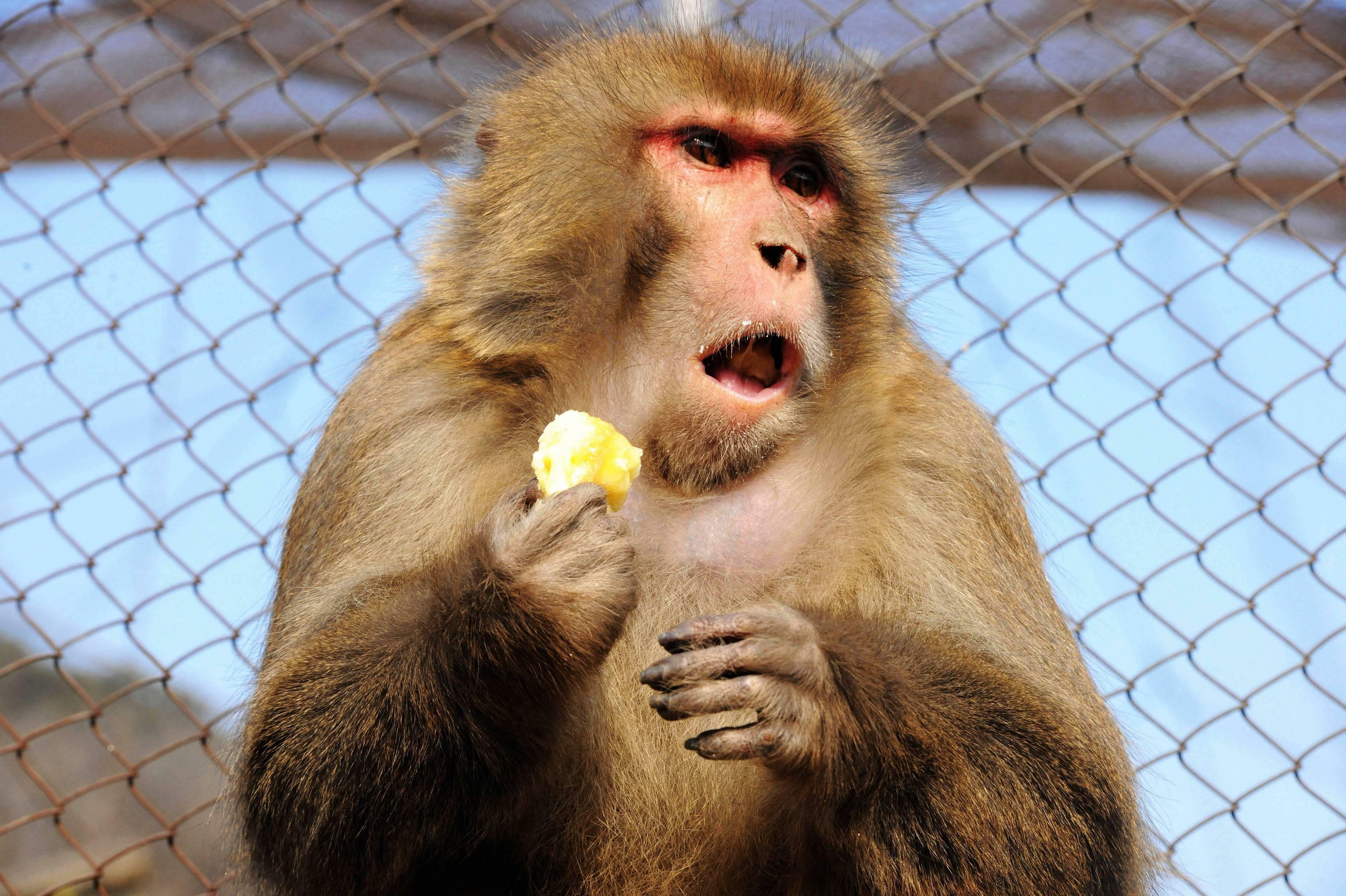 Chinesisches Neujahr: Wahrsager warnen Anleger vor wildem Affenjahr