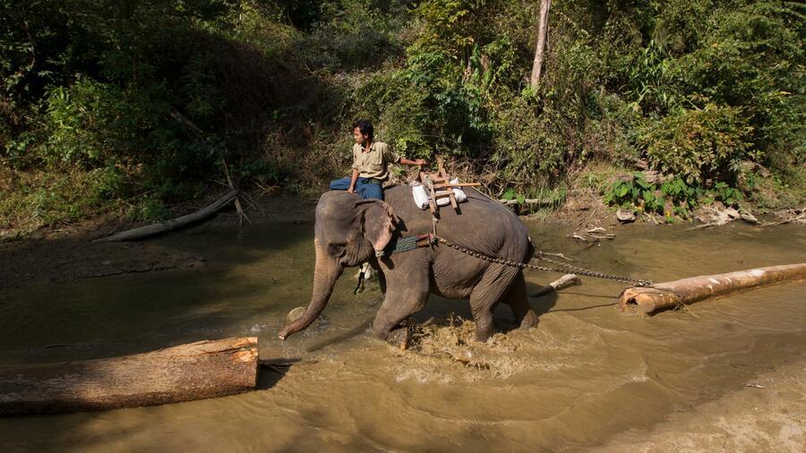 Myanmars arbeitslose Elefanten sollen auf Rettungseinsätze umschulen