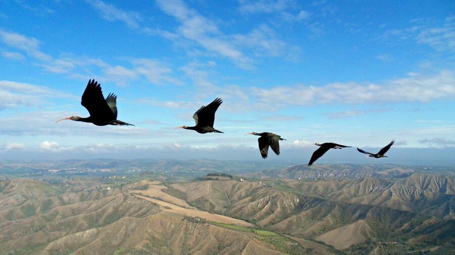 timeless design f028d 73723 Schneller schlau: Warum fliegen Vögel gern in V-Formation?