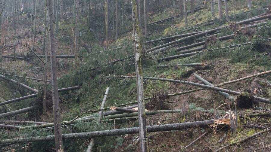 Verlorene Wälder