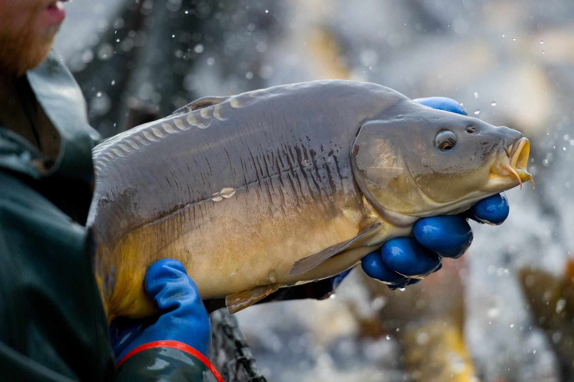 запрет на ловлю рыбы до 10 июня