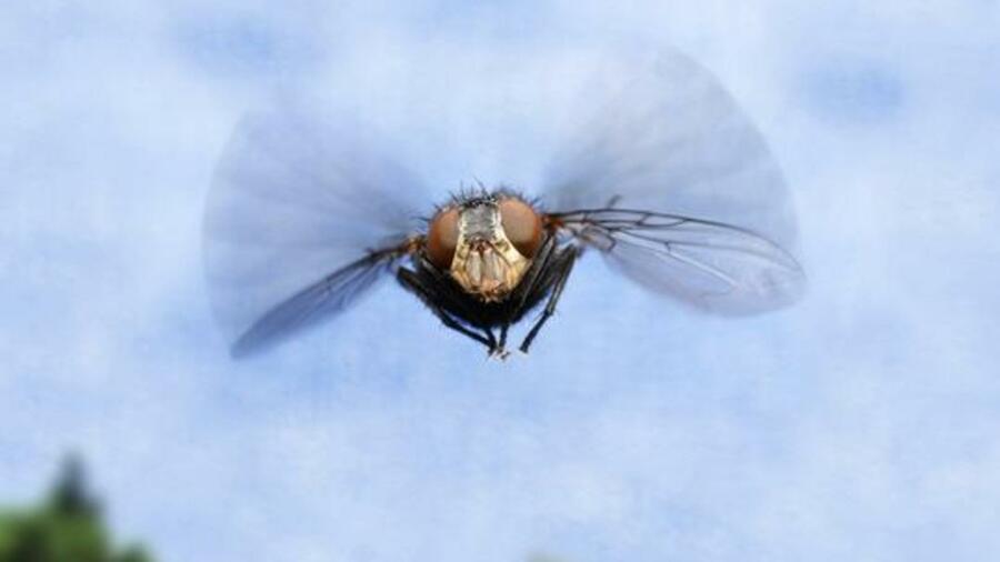 Biologie wie fliegen fliegen for Blumenerde ohne fliegen