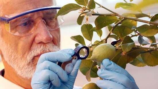 Wegen Monsanto-Deal: Bayer verkauft Geschäftsteile an BASF