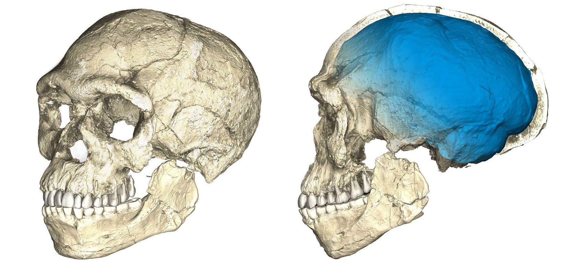 Evolution des Menschen: Modernes Gesicht, archaischer Hinterkopf