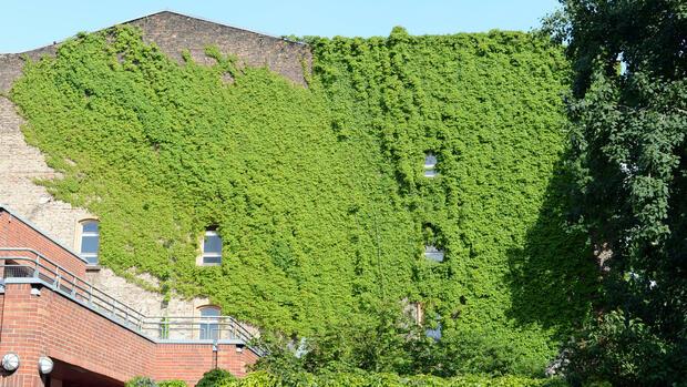 Berlin und der klimawandel pflanzen als nat rliche for Berlin pflanzen