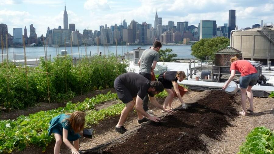 Freiwillige Helfer beackern die Beete der New Yorker Dachfarm. Quelle: Eagle Street roof top farm