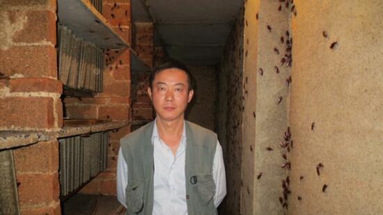 boomende zucht wie chinesen profit mit kakerlaken machen. Black Bedroom Furniture Sets. Home Design Ideas