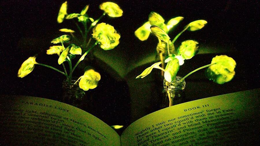 Moderne Lampen 93 : Lebende lampen forscher lassen pflanzen leuchten