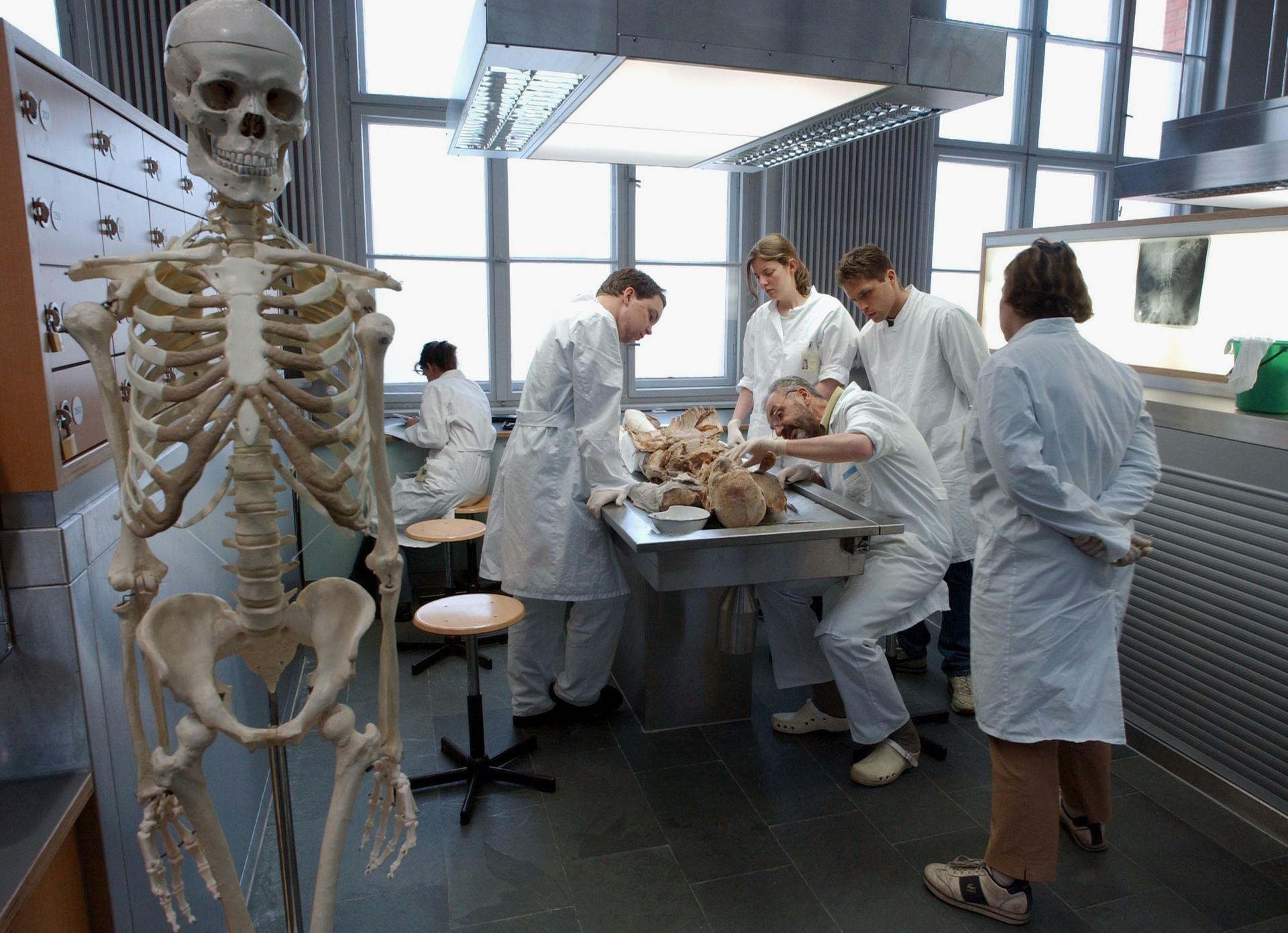Anatomie: Für ein Jahr in die Kühlkammer