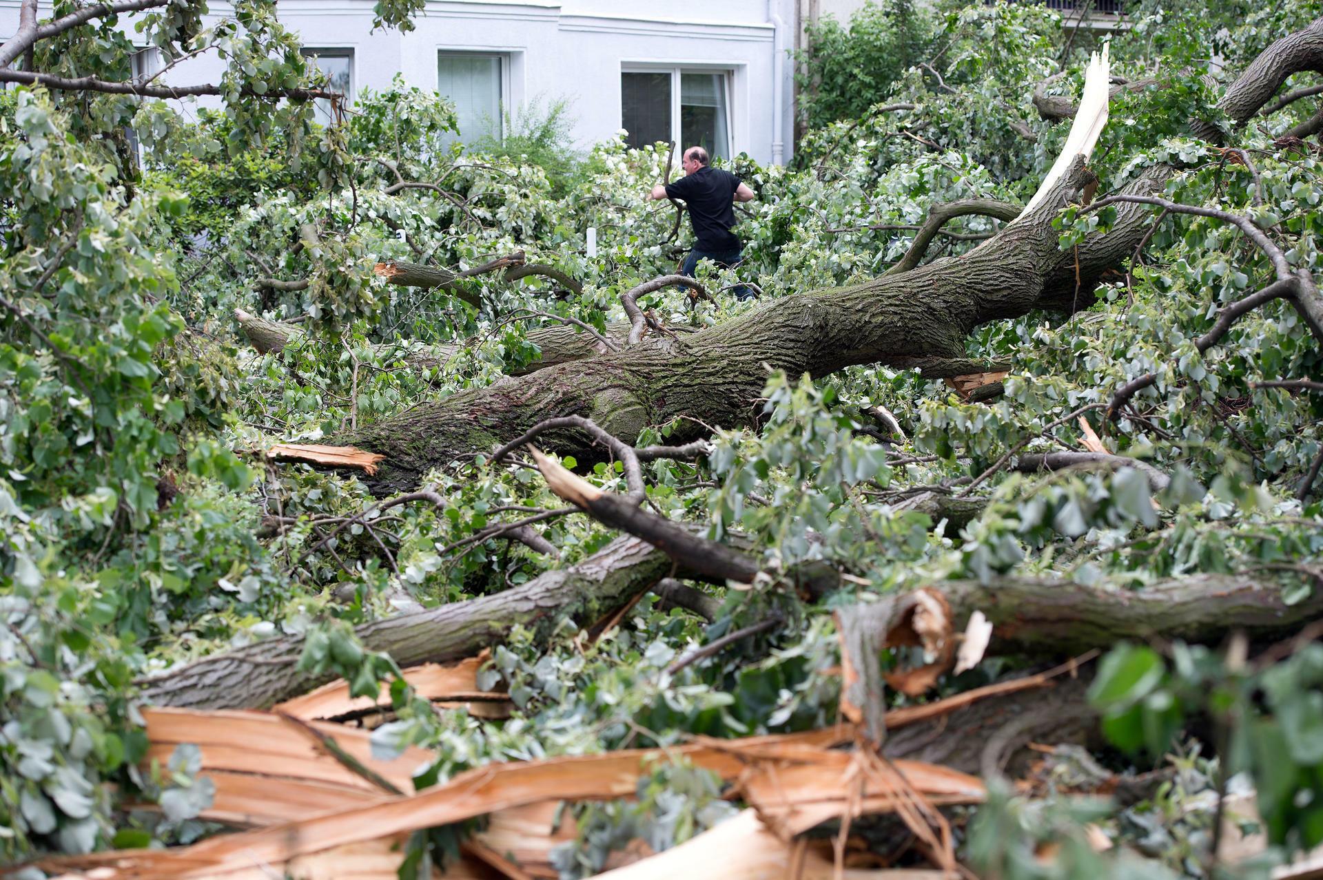 Sturmschäden Manche Baumbesitzer Sind Selbst Schuld