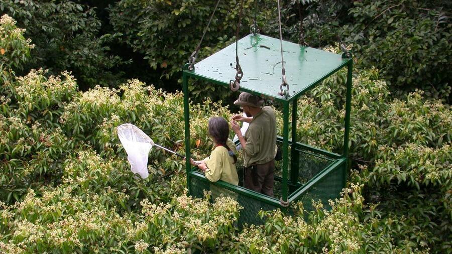 Bilder der woche mit dem kran durch den dschungel for Boden im regenwald