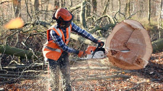 Polizei auf größeren Einsatz im Hambacher Wald vorbereitet