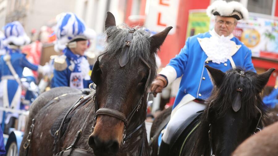 Karneval Köln Pferde