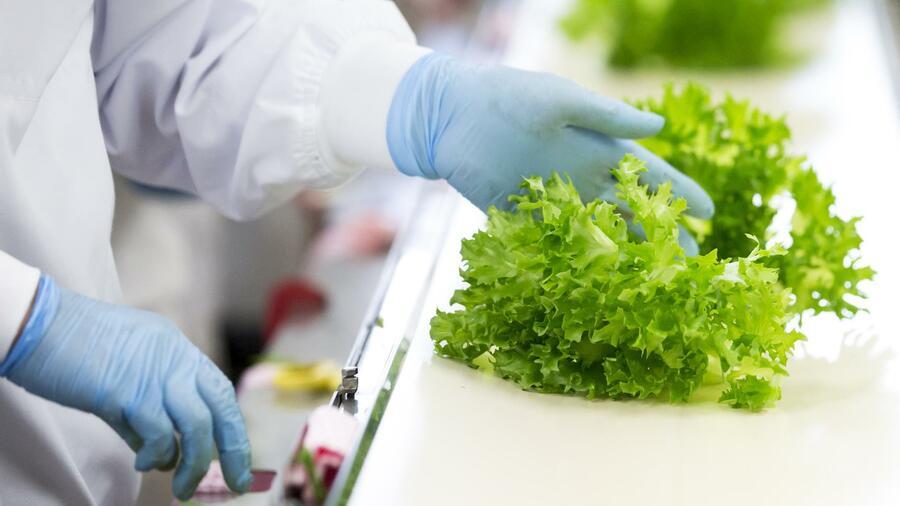 Ernährungswissenschaftler entkoppelten die Ernährung