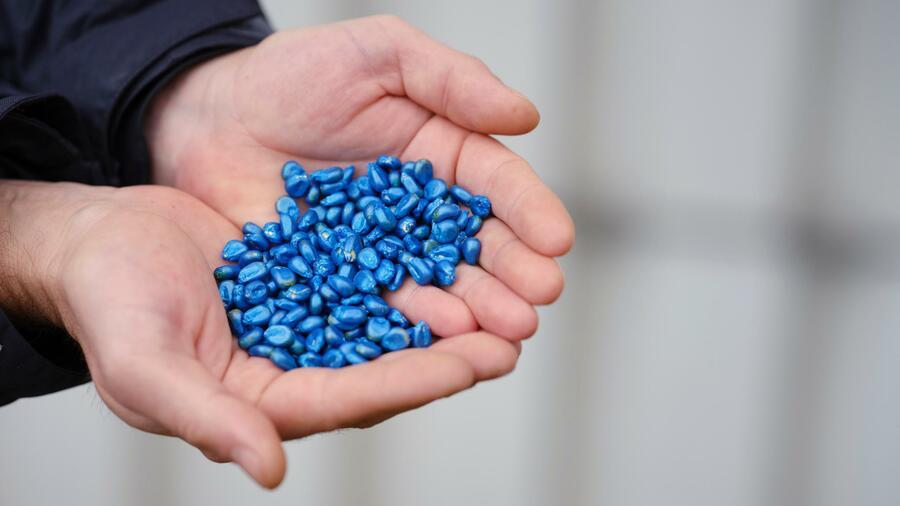 Die Hinguckerfarbe der Saatgutbeschichtung hat auch einen praktischen Effekt: Bei der Aussaatkontrolle im Boden sieht man die Samen gut Quelle: Seedforward