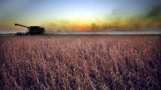 Übernahmen in der Agrochemie: Die große Wette auf Monsanto