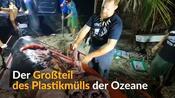 Verschmutzung der Ozeane: Toter Wal mit 40 Kilo Plastik im Bauch angespült