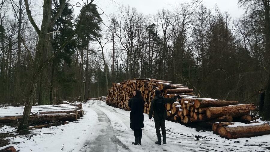 Abholzung in polnischem Urwald ist gegen EU-Recht