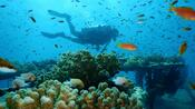 Klimawandel: Korallen im Roten Meer trotzen dem tödlichen Trend