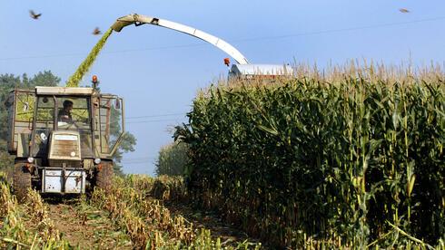 Im Zusammenspiel zwischen gentechnisch manipulierten Pflanzen und Unkrautgiften hat sich ein Super-Unkraut herausgebildet, das resistent gegen Vernichtungsmittel ist. Quelle: dpa