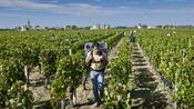 Immobilien: Warum in Italien und Frankreich Millionen für Weingüter bezahlt werden
