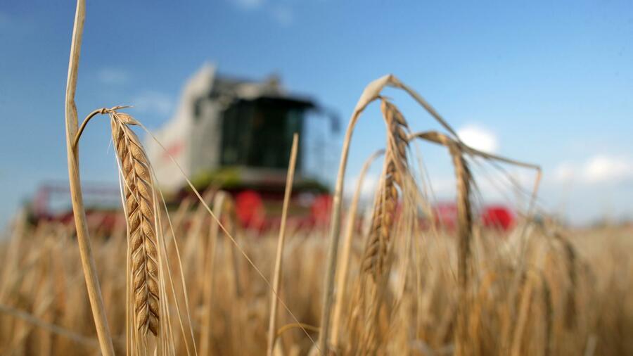 Dürre und Hitze setzen deutschen Landwirten zu